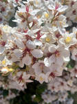 White flowers 15/9/2020