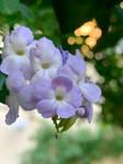 Violets 17/9/2020