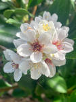 White flowers no2 16/2/2021