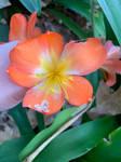 Orange flower 3/6/2021