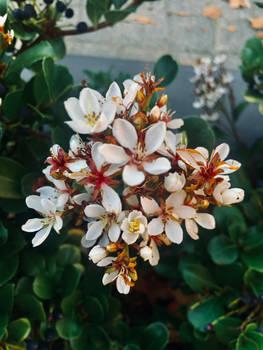 White flowers 4/6/2021