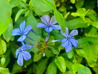 Blue flowers 12/6/2021