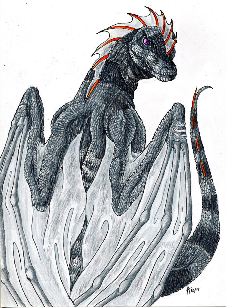 Realistic Dragon by ARVEN92Drawings Of Dragons Realistic