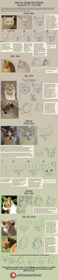 Patreon Tutorial: How To Draw Cat Heads