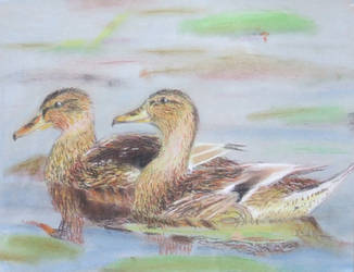 Young ducks by thesvetislav