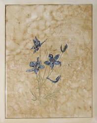 Blue field flowers by thesvetislav
