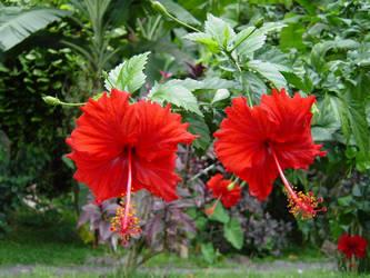 Tahiti_Flower_1