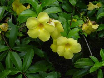 Tahiti_Flower_3