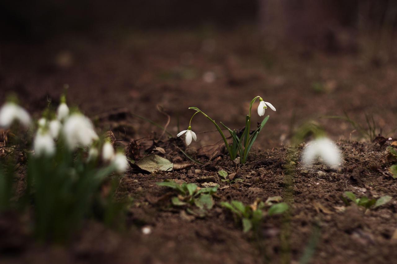 spring! by molnar86