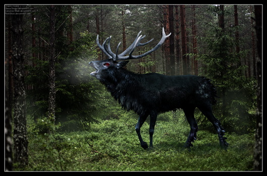 The Ravenstag