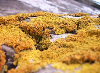Lichen Landscape by Redmannine