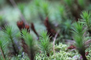 Green Summer Macro by Redmannine