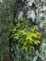 Green Lichen by Redmannine