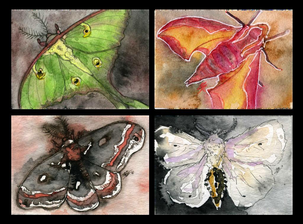 more moths by Creative-Caro