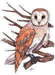 Barn Owl by Creative-Caro