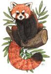 Red Panda by Creative-Caro