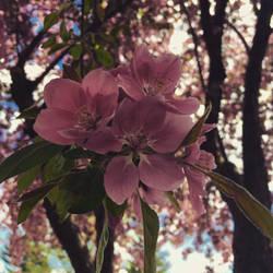 Summer in Three by Zm1L3