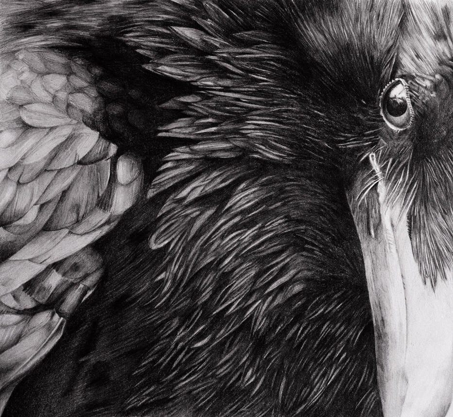 raven wallpaper black and white