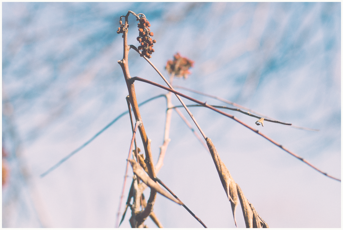 Grace by NMatychuk