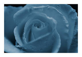 Blue Rose by themobius