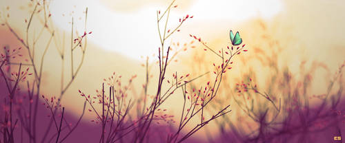Butterfly by Thaximus