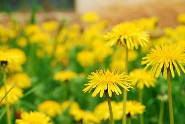 Yellow by Nanera