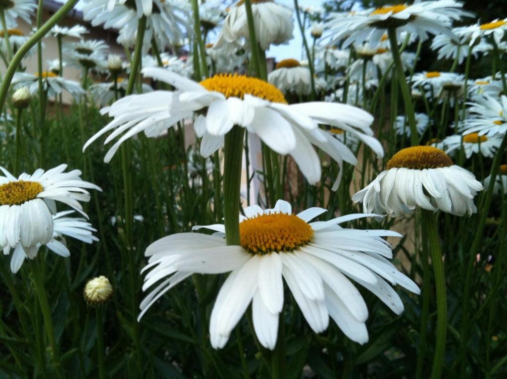 Mes quelques photos.  Flowers_by_ayumi_baka_neko-d7rlguk