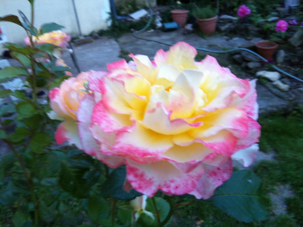 Mes quelques photos.  Flower_and_spider_by_ayumi_baka_neko-d7s1r53