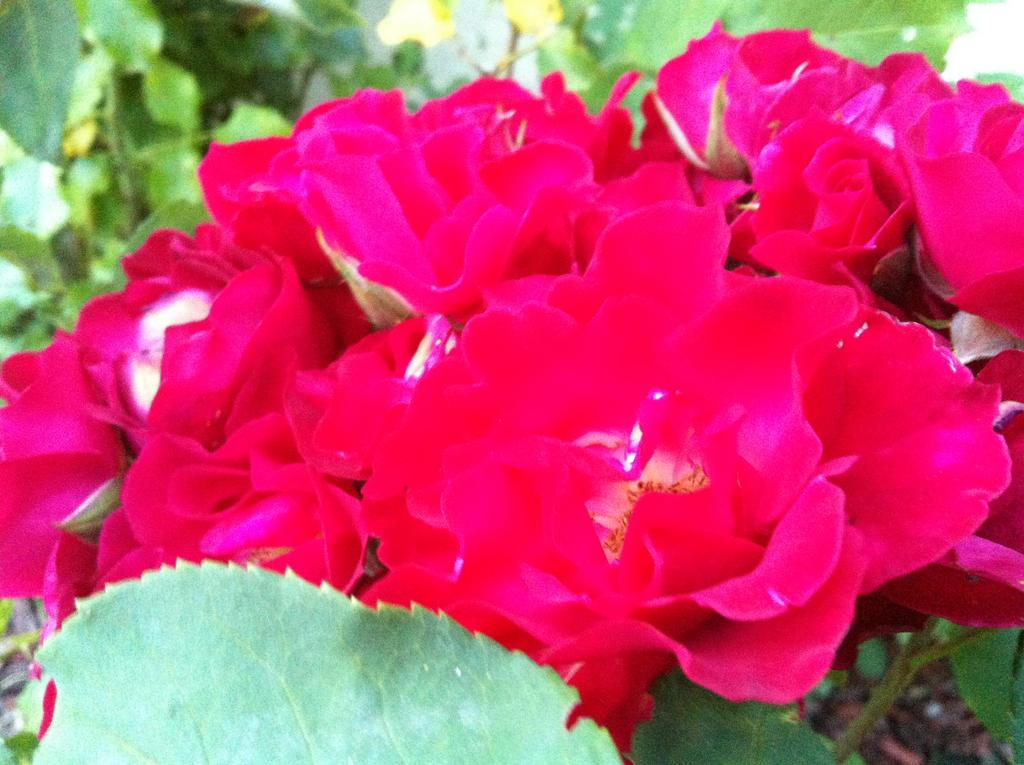 Mes quelques photos.  Flowers_by_ayumi_baka_neko-d7sgbfm
