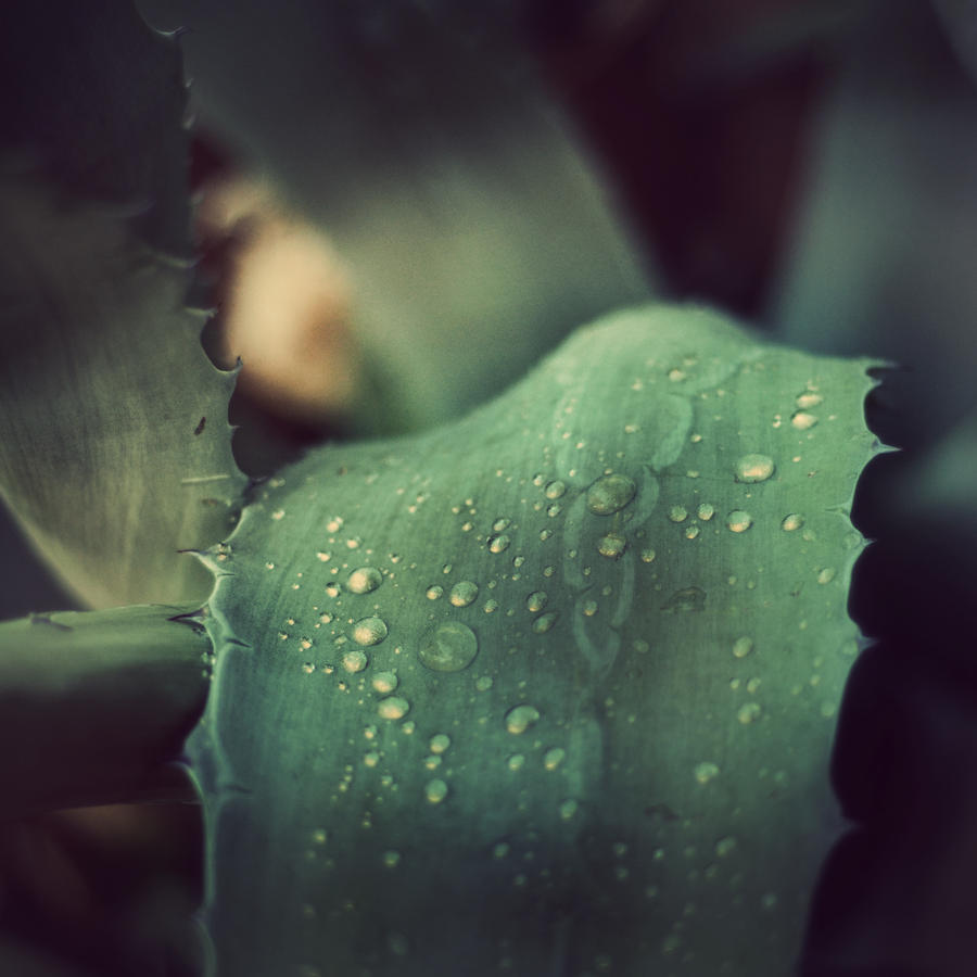 Raindrops by marinsuslic