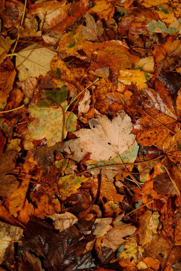 Leaves 003