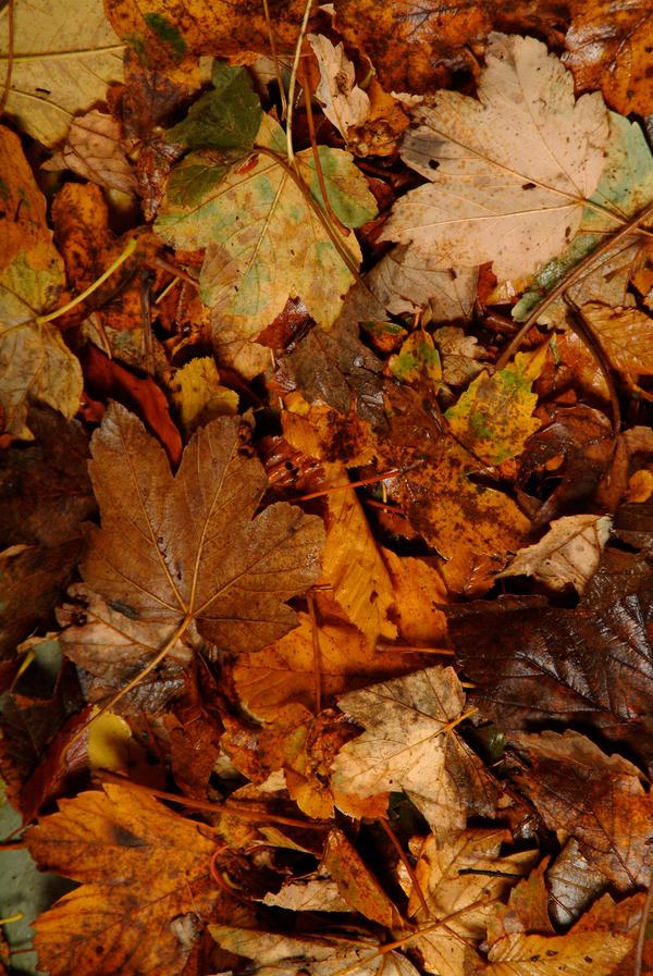 Leaves 006