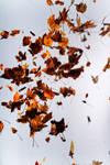 Floating leaves 001