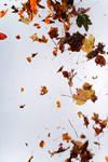 Floating leaves 002