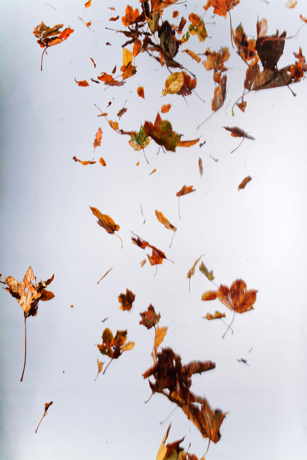Floating leaves 003 by ISOStock