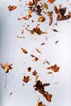 Floating leaves 003