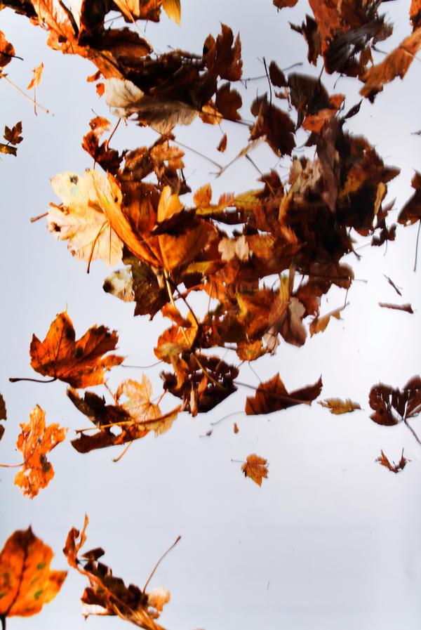 Floating leaves 004