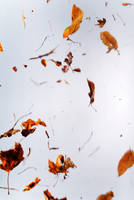 Floating leaves 005 by ISOStock