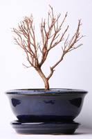 Dead tree 002 by ISOStock
