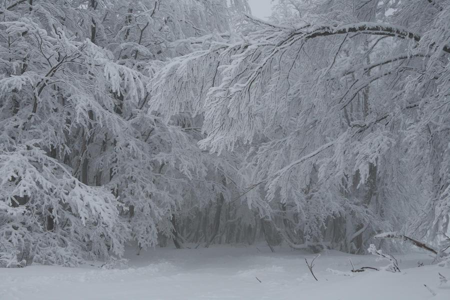 Winter 055 by ISOStock