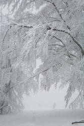 Winter 058 by ISOStock