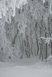 Winter 060 by ISOStock