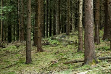 Woods 009 by ISOStock