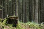 Woods 006