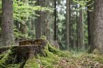 Woods 005
