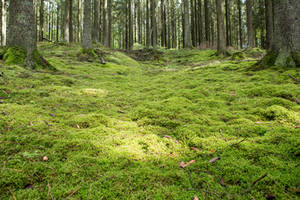 Woods 019 by ISOStock