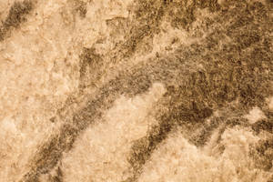Texture 01 stone
