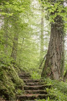 Woods 045