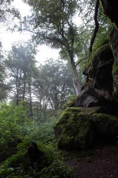 Forest rocks boulders