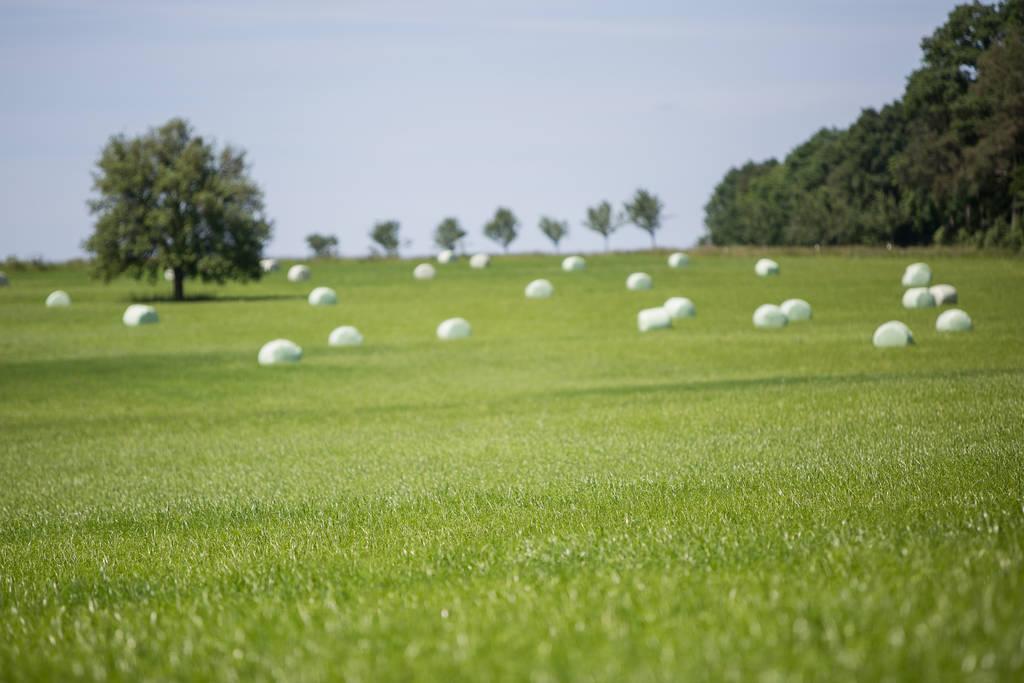 Gras field hay stacks 005 by ISOStock